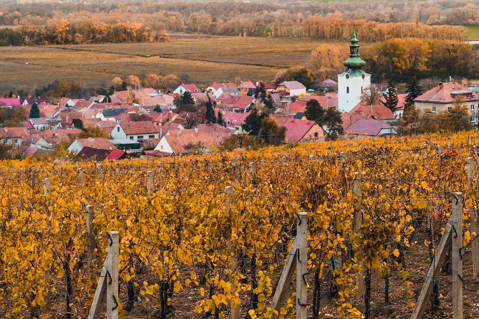 vinarstvi-pritluky-zdenek-bukovsky-vinohrady-nad-pritlukami