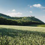 Pálava – zřícenina hradu Děvičky
