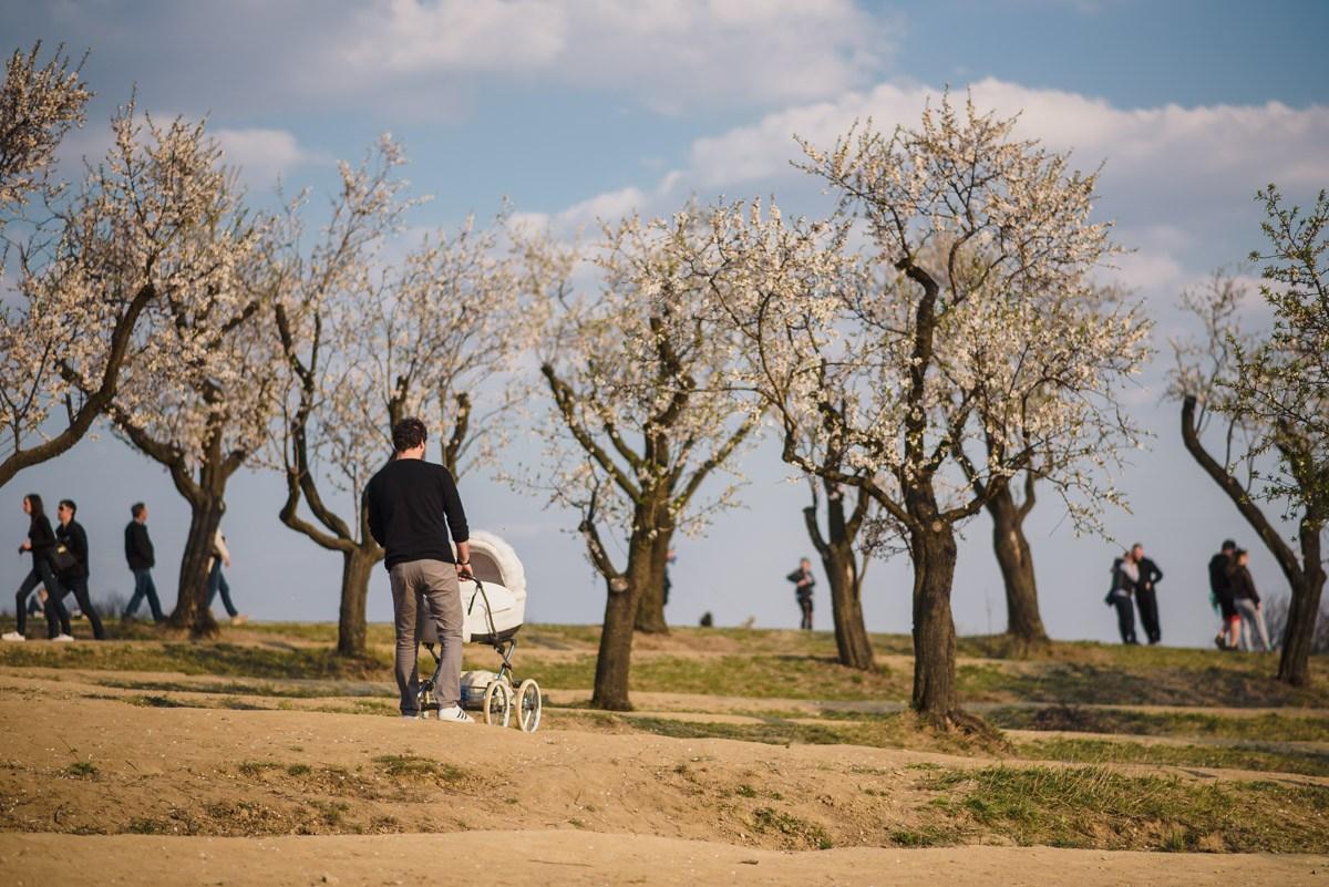 slavnosti-kvetoucich-mandloni-hustopece
